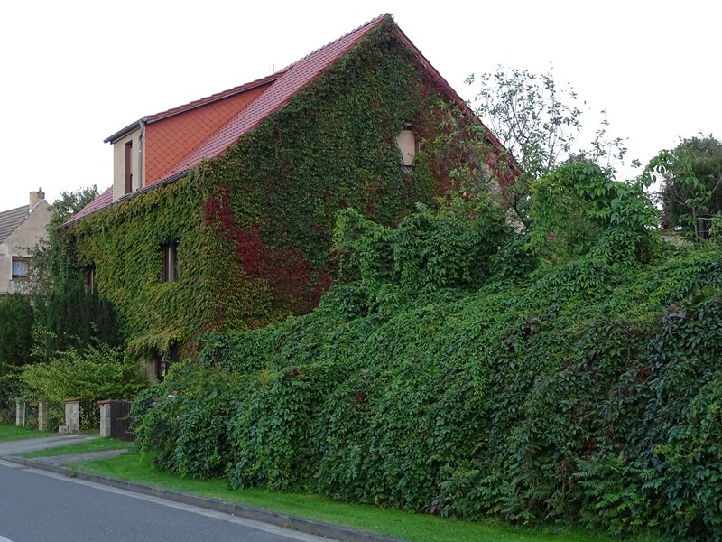 Das grüne Haus 2
